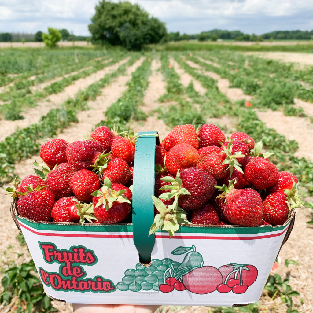 Cardboard basket of strawberries with a strawberry field behind it.